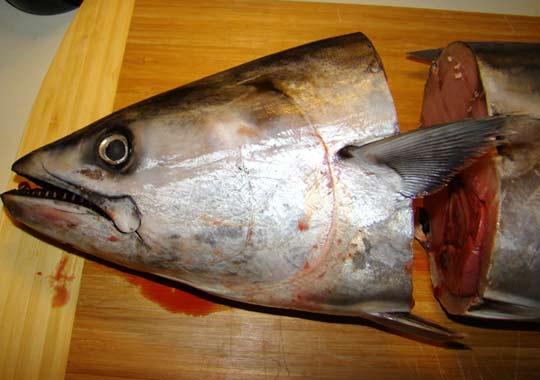 фото рыба пеламида