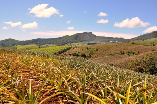 Кокосовое чатни с острова Маврикий