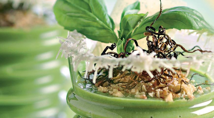 Рецепт Зеленый мусс с хрустящими цукини и пармезаном