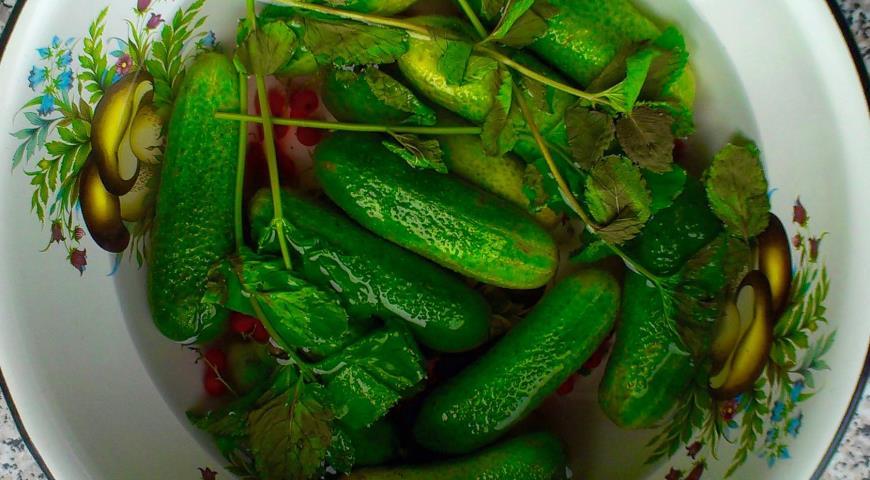 Рецепт Хрустящие малосольные огурцы с красной смородиной