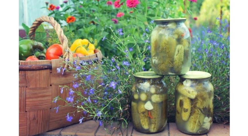 Рецепт Соленые огурцы консервированные