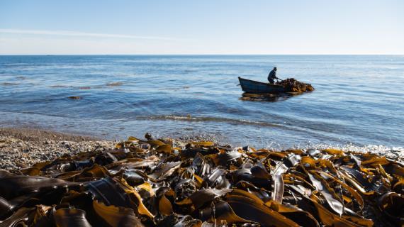 Морские водоросли - ускорители диет