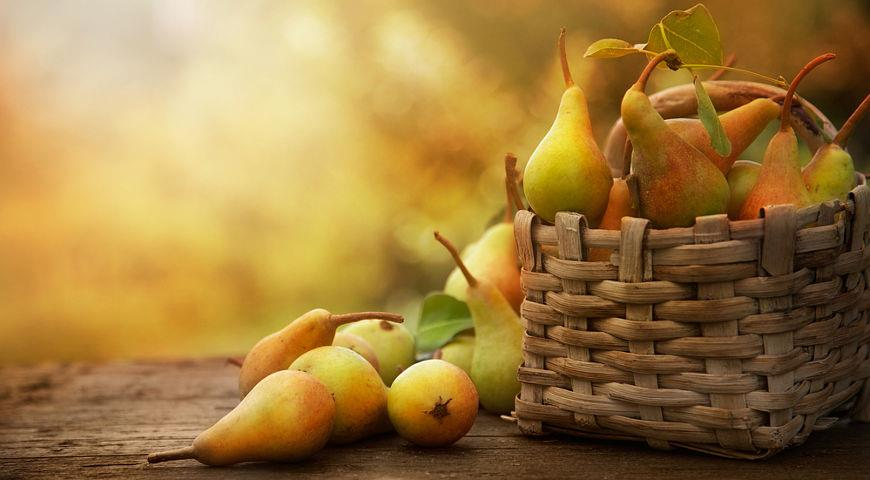 Экономная хозяйка: пять блюд из осенних груш