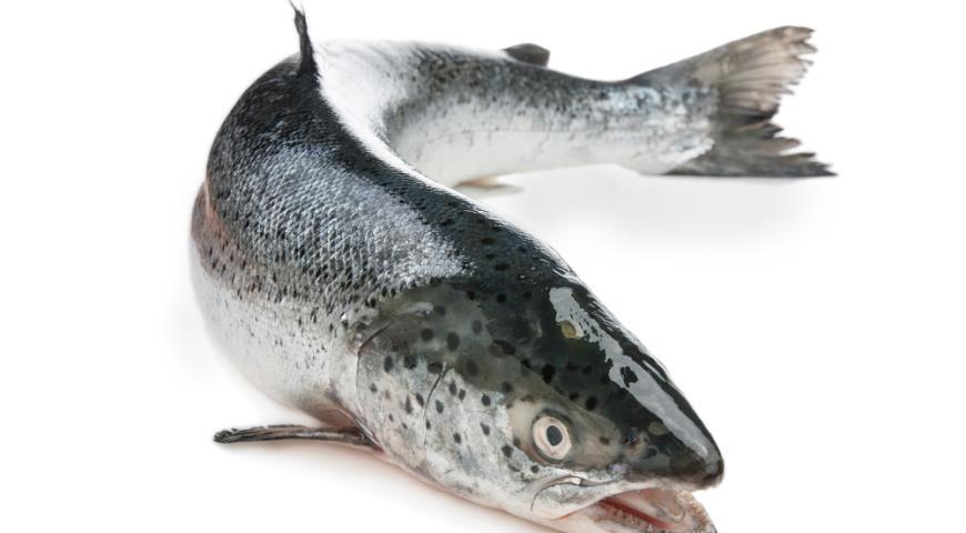 Полтонны незаконно добытых лососевых обнаружено рыбоохраной в тайнике в Архангельской области