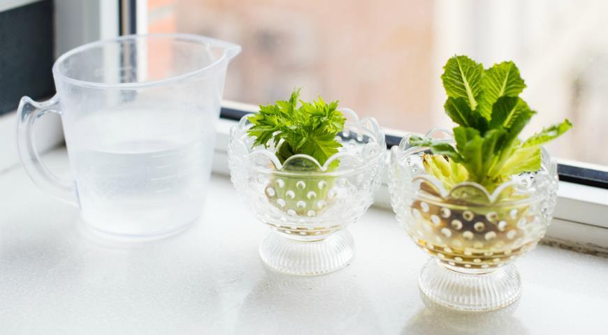 10 овощей, которые можно вырастить дома