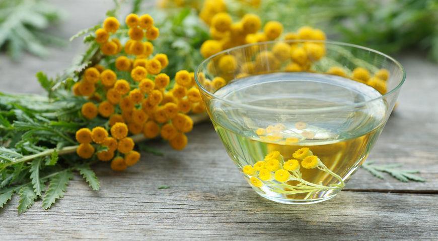Эфирное масло пижмы обладает антимикробным действием