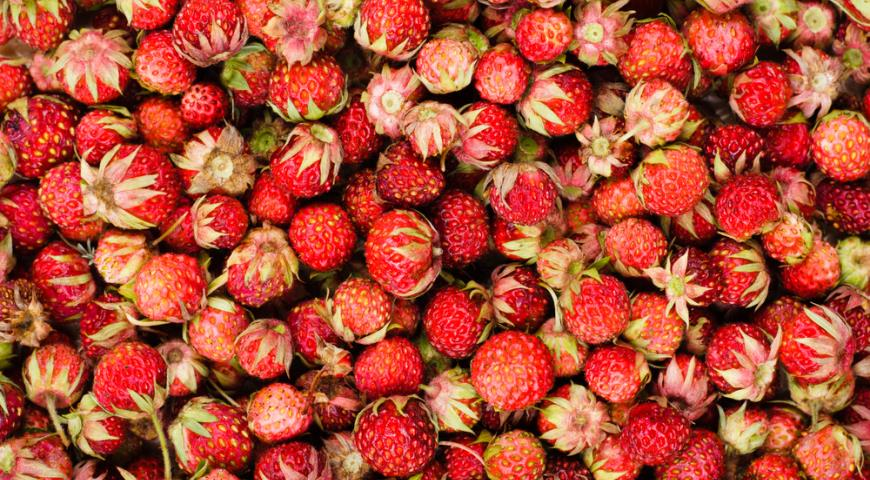 Клубника Fragaria moschata
