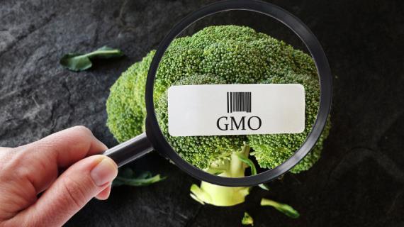 ЗОЖ: правда и ложь о ГМO, антиоксидантах и пластиковых контейнерах