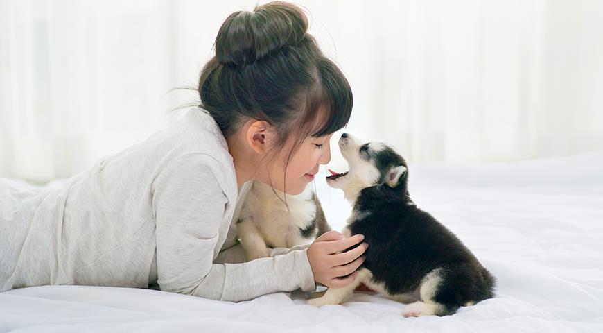 Едят ли в Корее собак?