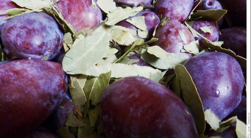Маринованные сливы, пошаговый рецепт с фото