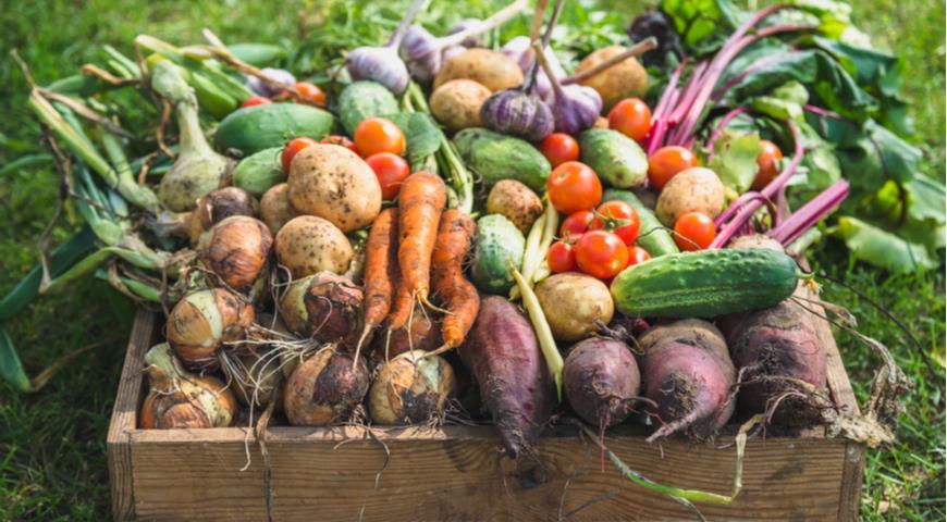 Урожай сезонных овощей