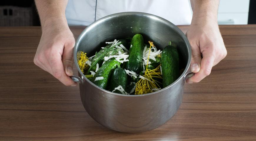 Огурцы соленые холодным способом, уложите огурцы и зелень в кастрюлю
